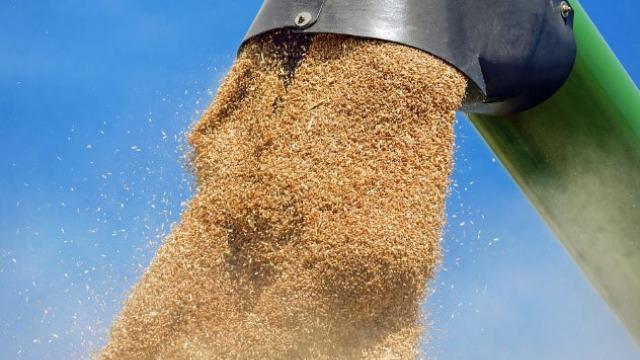 Izvoz pšenice u Egipat od 1. marta