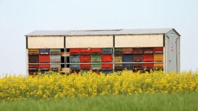 Pravilnik o uslovima i načinu gajenja pčela mora važiti za čitavu zemlju