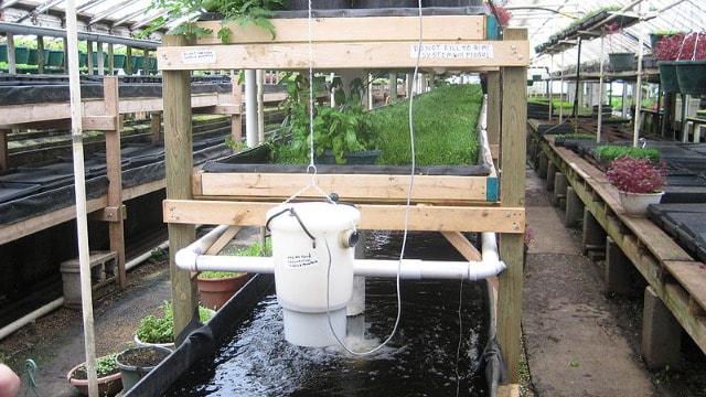 Pametna upotreba vode: Uzgoj riba u kombinaciji sa hidroponikom