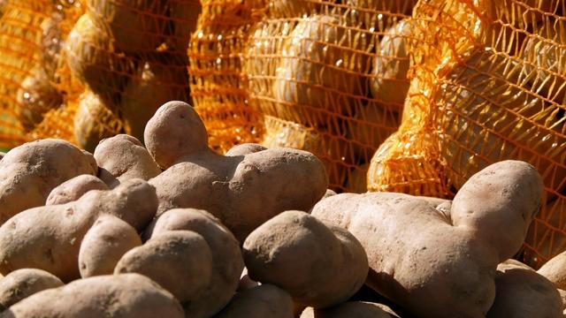 Sprečen ilegalni uvoz trulog krompira u Srbiju