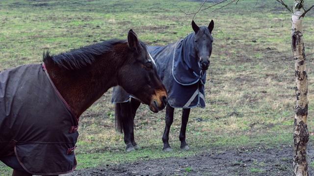 Trening konja: Preko zime važe drugačija pravila