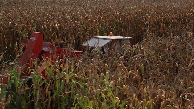 Hibridi kukuruza sa visokim genetskim potencijalom rodnosti