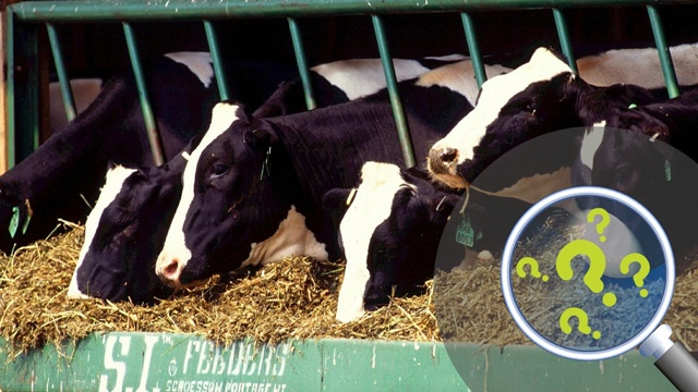 Pitali smo vas: Šta najviše koristite za ishranu stoke tokom zimskih meseci?