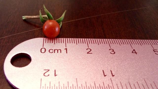 Veće od klica, a manje od rasada - Gajenje mikropovrća sve popularnije