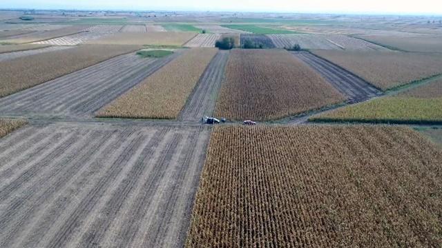 Hibrid kukuruza odličan za uslove intenzivnog gajenja