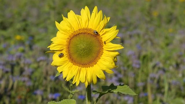 Preventivna kontrola: Krijumčarena sredstva pronašla put i do srpskih njiva, ugrožene i pčele