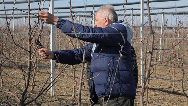 Rezidba voća u Slankamenu: Prvo treba napraviti procenu rodnosti