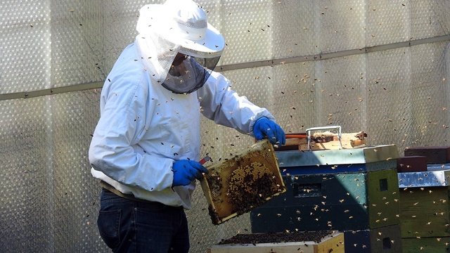 Urbano pčelarstvo: Gradska sredina je mnogo humanija za pčele