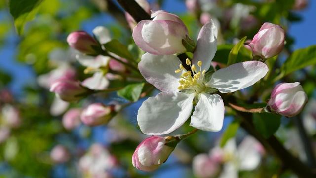 Prolećni radovi: 11 stvari koje morate obaviti u domaćinstvu i bašti