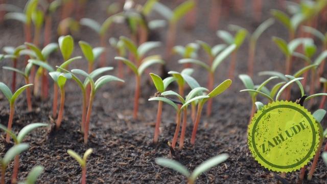 Zablude: Za pravilan rast povrća razmak između biljaka nije bitan