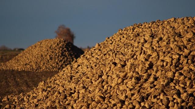 Šećer najjeftinija namirnica - Da li ćemo još uvek gajiti šećernu repu?