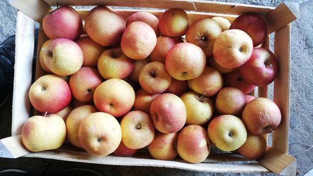 Razočarani niskom cenom jabuke: Neki je prodaju za 4 dinara, drugi je poklanjaju