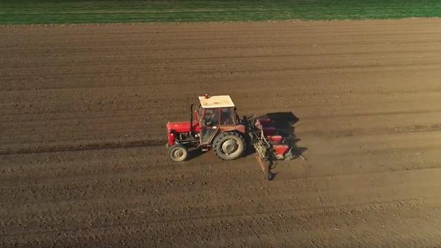 Proizvodnja kukuruza na 1.000 ha - Suzbijanje korova od velike važnosti