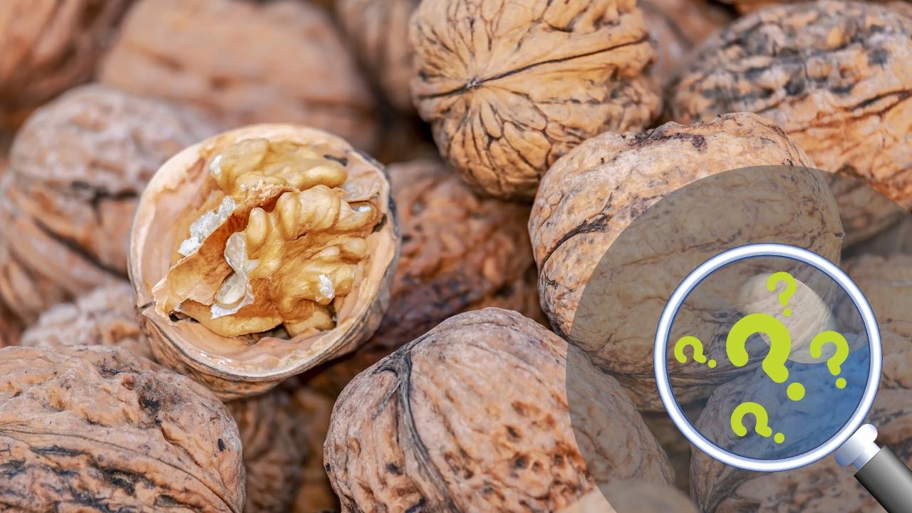 Pitali smo vas: Koja je najprofitabilnija voćka za gajenje u Srbiji?