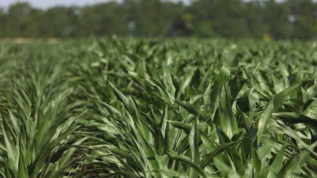 Đubrivo za brži porast biljaka i veću lisnu masu (pogodno i u organskoj proizvodnji)