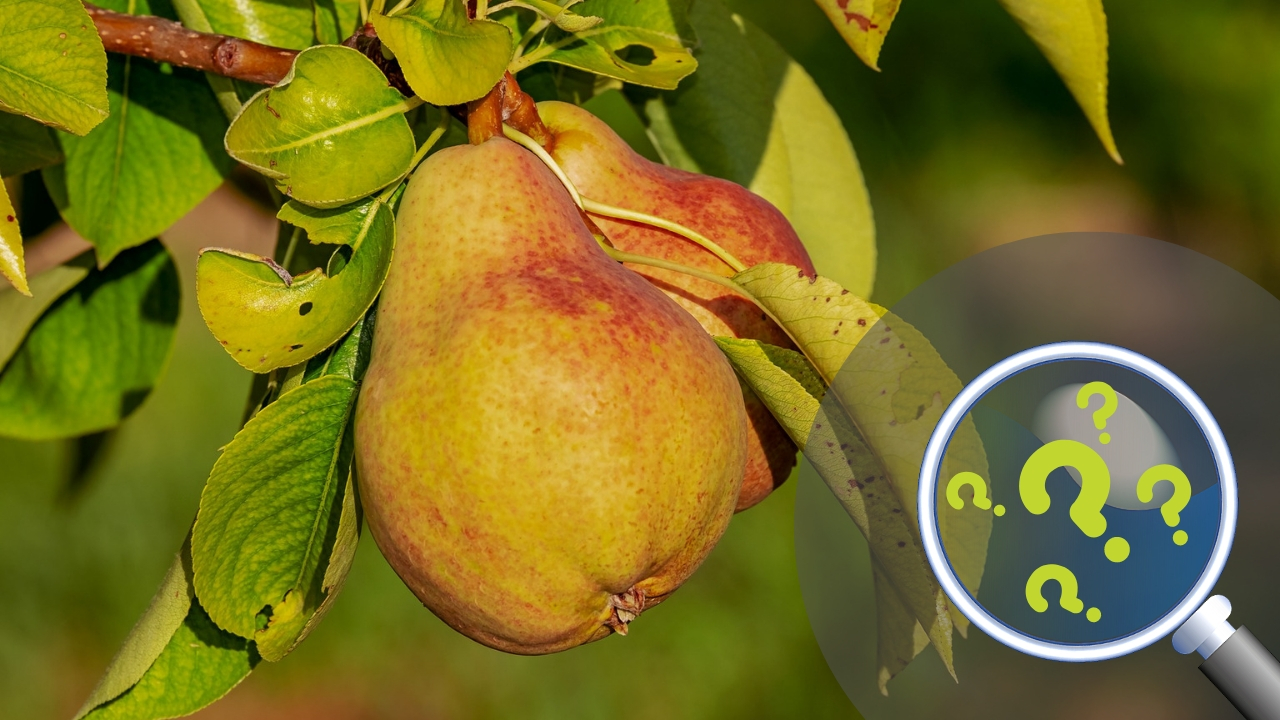 Pitali smo vas: Čime tretirate voćne zasade?