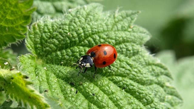 Još 7 razloga zašto je kopriva dobra za biljke