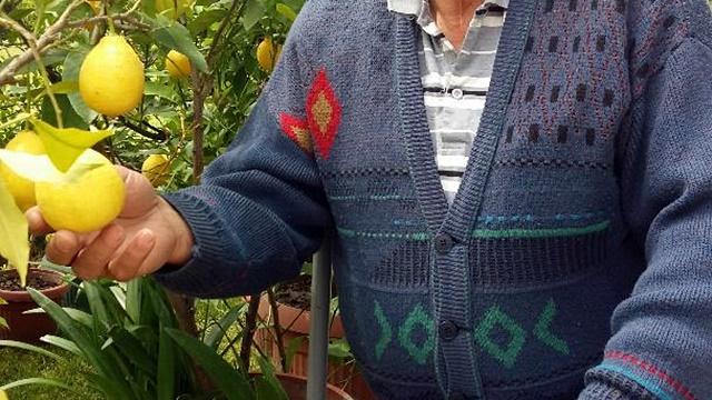 Ljubav i profit: Dve decenije gaje limun u srcu Srbije