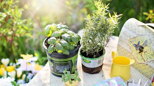 Saveti za gajenje začinskog bilja u saksijama