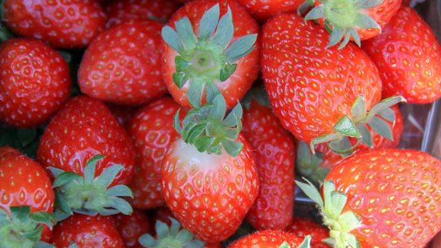 Uprkos kišama kvalitet jagode dobar, cena od 150 do 200 dinara