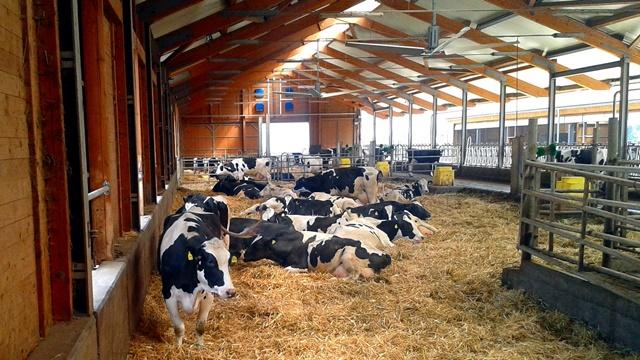 Kako postiću dobru cenu mleka u Srbiji?