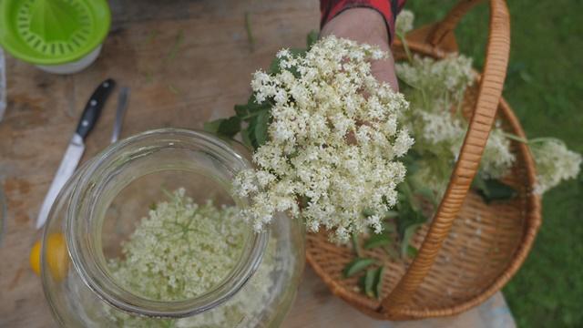 Zaštitite krompir cvetovima zove