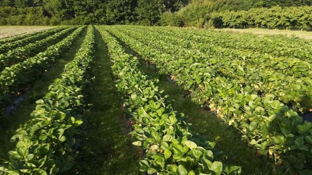 Selo hvali i na selu živi: Mladi voćar poljoprivredu ne bi menjao ni za šta