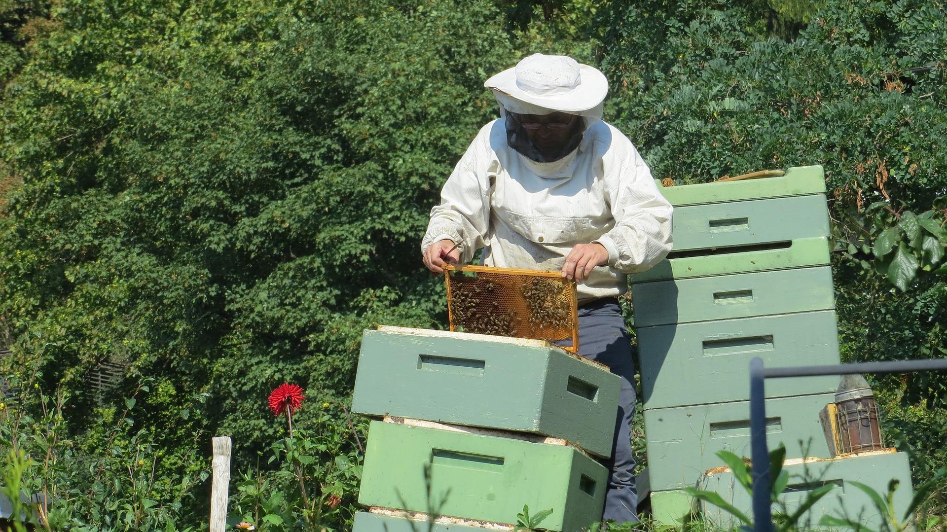 Pčelari za razliku od malinara imaju bolju saradnju sa državom