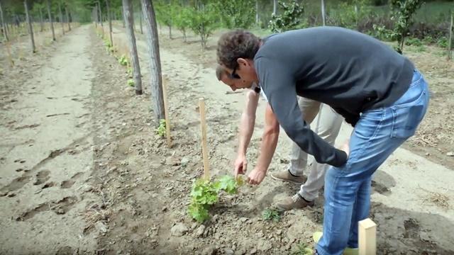 Mnogi odlaze u inostranstvo, a on ulaže u proizvodnju grožđa