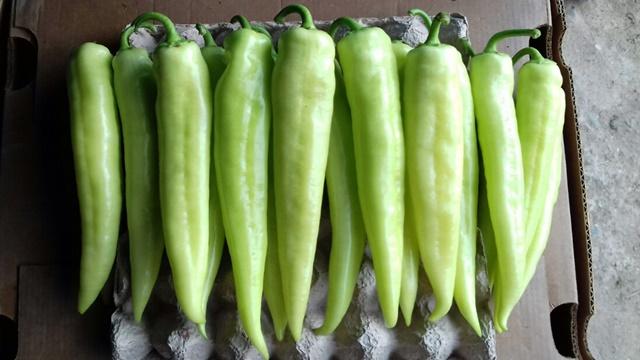 Ljuta paprika džinka – cena ove godine bolja nego ikad