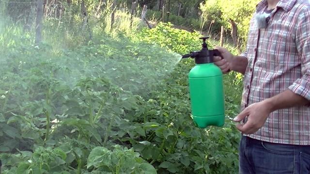 Biološki preparati: Prihrana krompira u stresnim uslovima