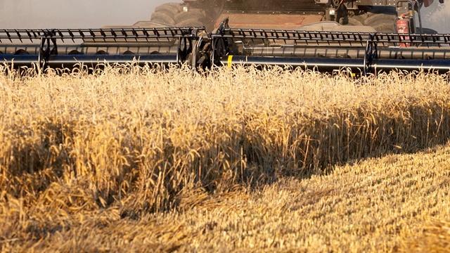 Cena pšenice izuzetno niska za ovogodišnji rod - Ratari organizuju protest