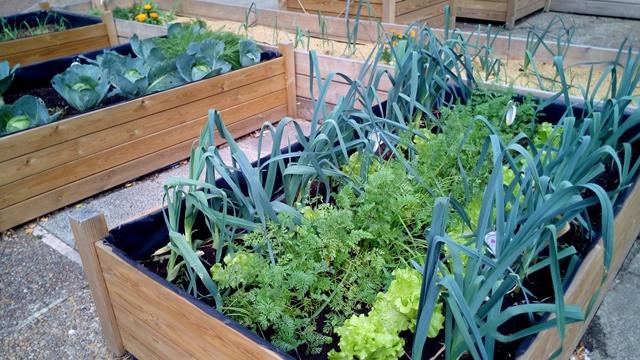 Gajenje povrća na balkonu - korist i zadovoljstvo