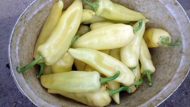 Cena paprike jako loša, ali postoji šansa da se to promeni
