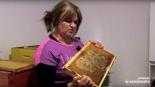Pčelarstvo: Za ozbiljniji profit potrebna je mnogo veća proizvodnja