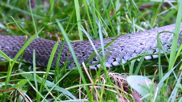 Kako da oterate zmije iz dvorišta i bašte?