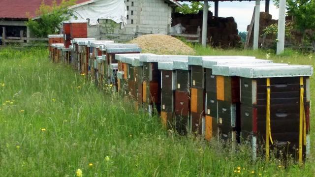 Pčelarska zadruga: Brendirani proizvodi na stranom tržištu