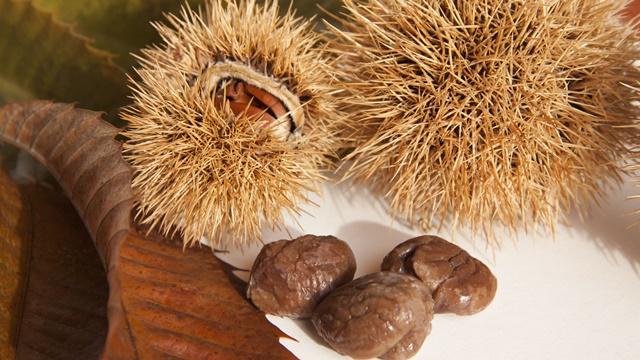 Uzgoj pitomog kestena: Često se koristi u ishrani i za ogrev