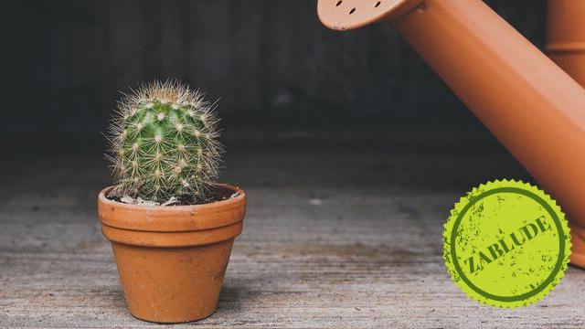 Zablude: Da li sobne biljke rastu brže u velikoj saksiji i na suncu?