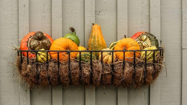Saveti za početnike: Obavezni jesenji radovi u organskoj bašti