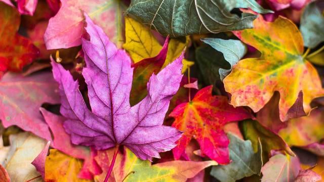 Zašto lišće menja boju i opada u jesen?