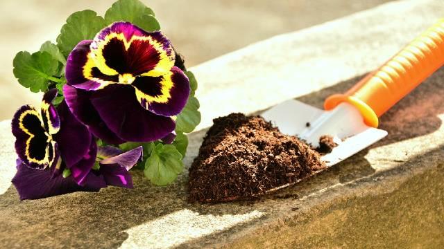 Sadnja u saksijama: Kako odabrati kvalitetan supstrat?