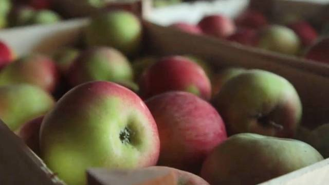 Pre 20 godina smo je odbacili, a danas je ovo najisplativija sorta jabuke