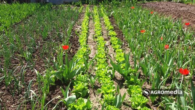 Napravite dobru računicu: Koliko biljaka treba posaditi po članu porodice?