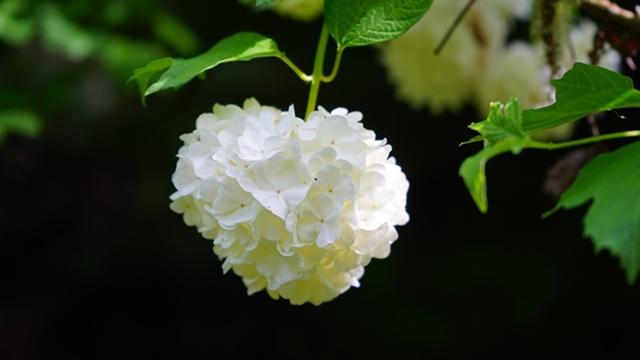 Zašto je važno saditi autohtone vrste biljaka i cveća?