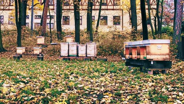 Pravilna ishrana: Čime dohraniti pčele tokom jeseni?