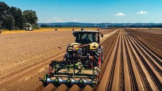 Proizvodnja šargarepe: Najnovije tehnologije za uštedu vremena i novca