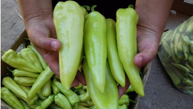 Koliko vrsta povrća treba uzgajati da bi bilo profitabilno?
