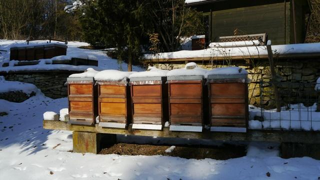 SAVETI ISKUSNOG PČELARA: Crna folija pobeđuje i najljući mraz