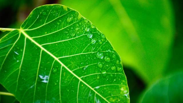 OTKRIVENA TAJNA fotosinteze: Imaćemo VEĆE PRINOSE